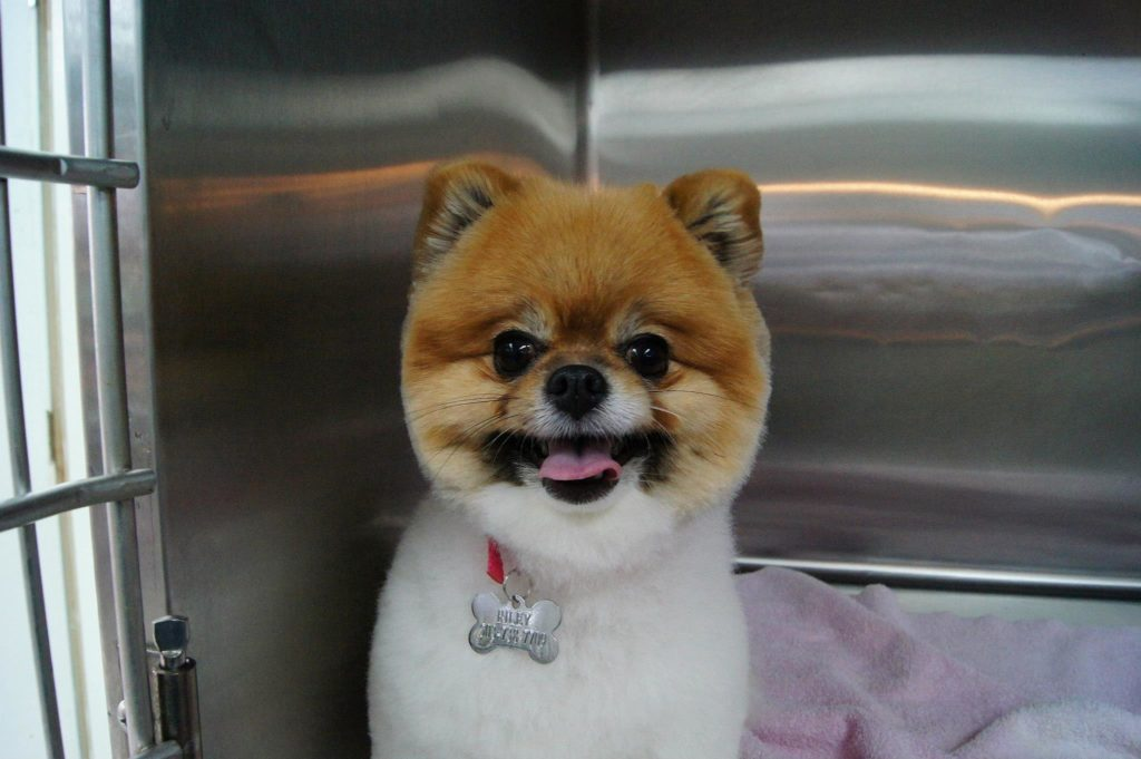 dog after grooming