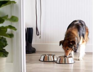 Dog essentials - dog feeding bowls