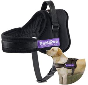 Dog essentials - dog harness