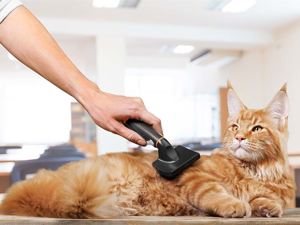 grooming a cat with a brush