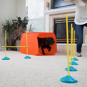 Indoor Dog Agility Training Obstacle Course