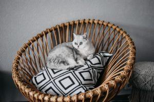 Cat Breeds for Seniors