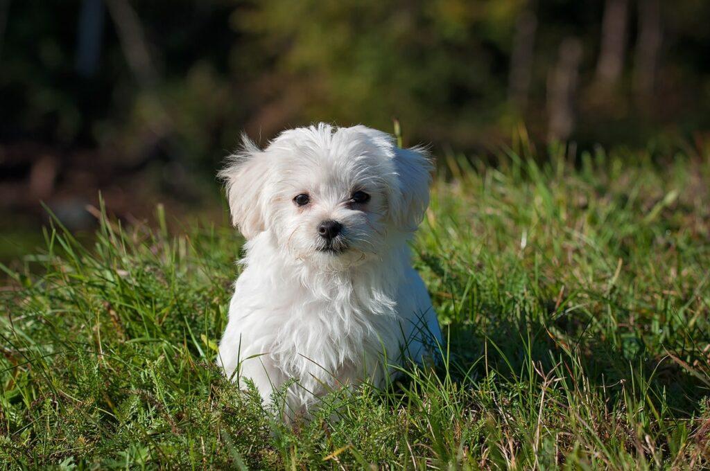 Best Dog Breeds for Seniors