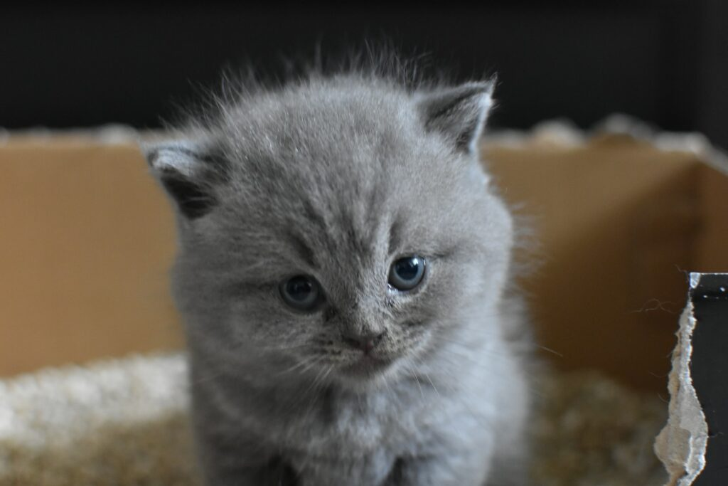 Best Things to Buy for Your New Cat on a Bigger Budget