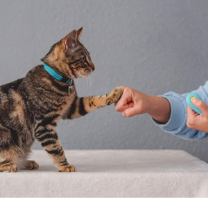 CAT SCHOOL Cat Training Kit