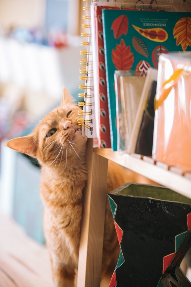 Cat Proofing Your Home