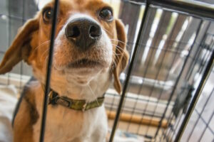 Does My Dog Need a Dog Crate?