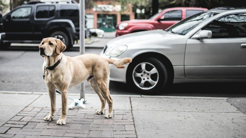 The Best Dog Breeds for Children and Babies - Labrador retriever