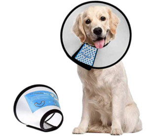 Dog Cone - medical surgery recovery