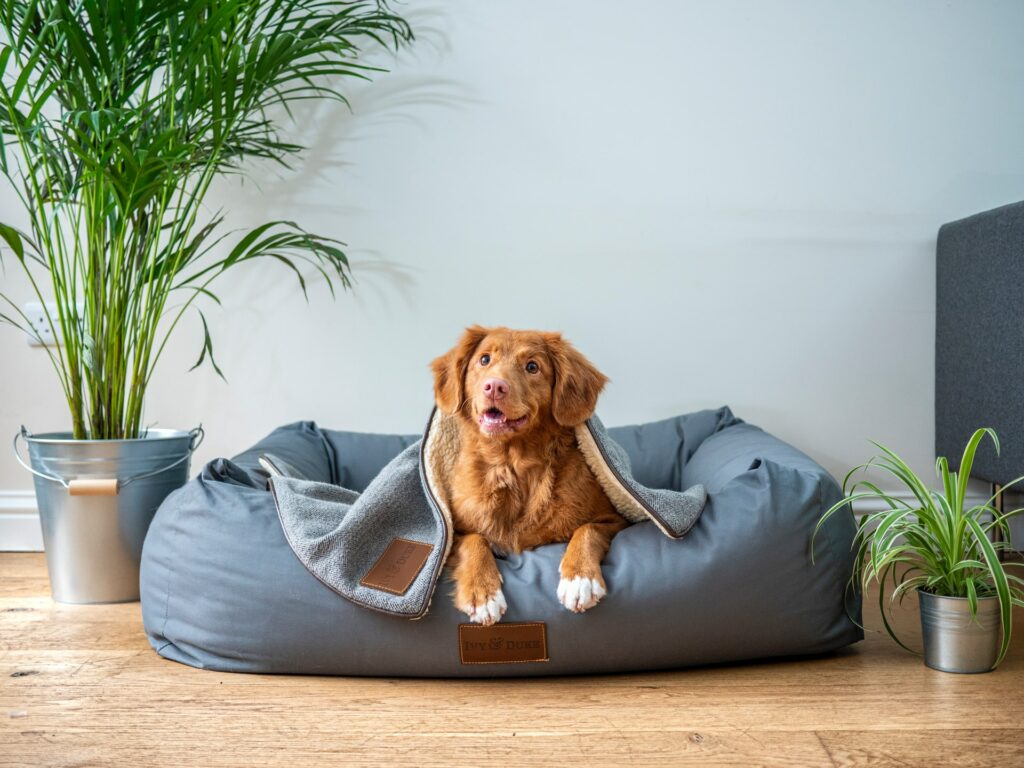 Where to Leave My Dog When Travelling or on Vacation
