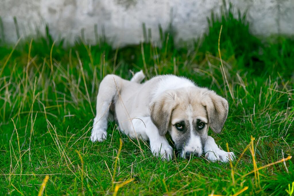 What to Do When Your Dog Is Not Eating