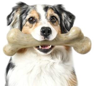 Extreme Dinosaur BarkBone Dog Chew Toy
