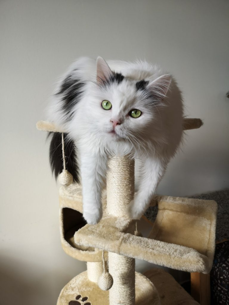 cat sitting on top of a cat tree with a scratching post
