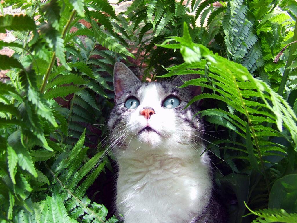 Healthiest Cats breeds
