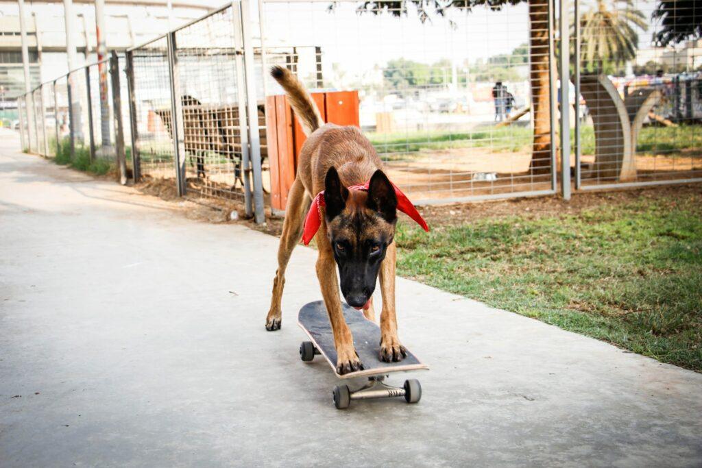 How to Teach a Dog to Ride a Skateboard
