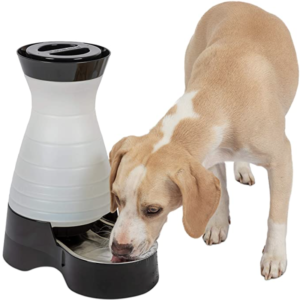 PetSafe Healthy Pet Dog Water Station