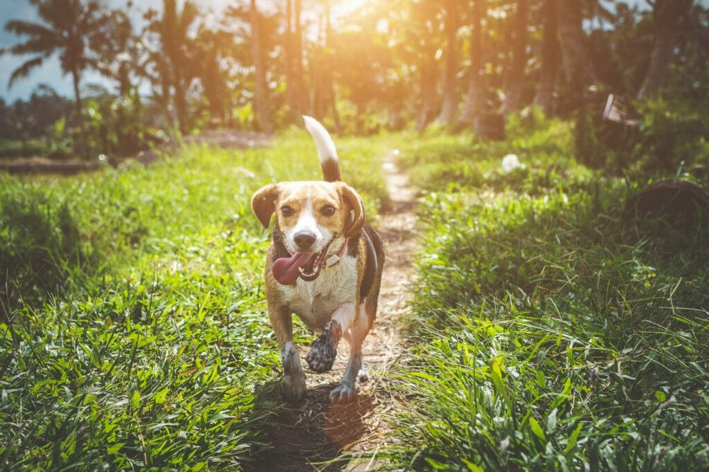 The Most Intelligent Dog Breeds