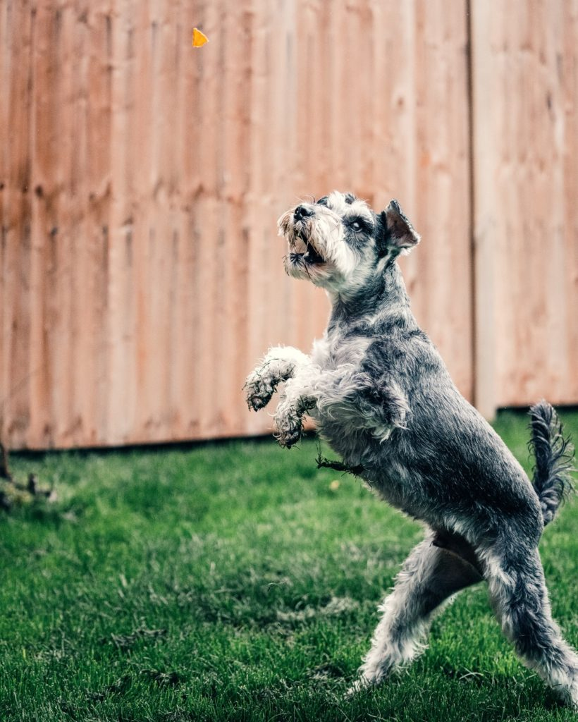 Best Things to Buy for Your Dog on a Bigger Budget