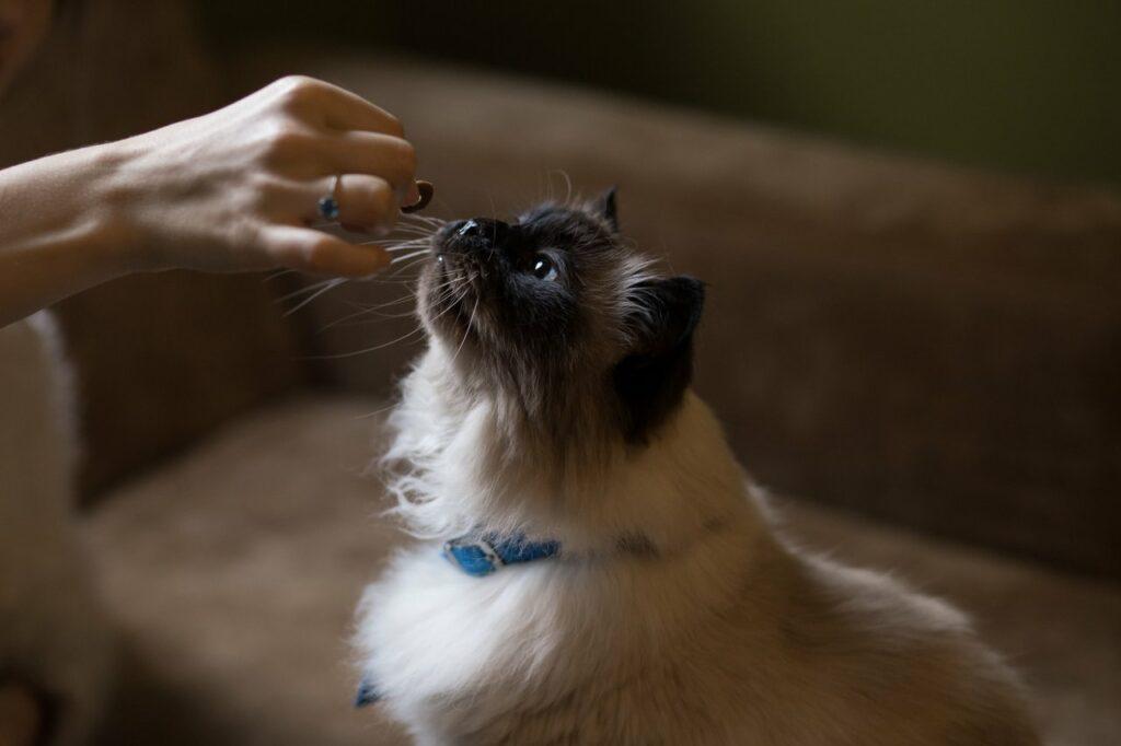 feeding new cat