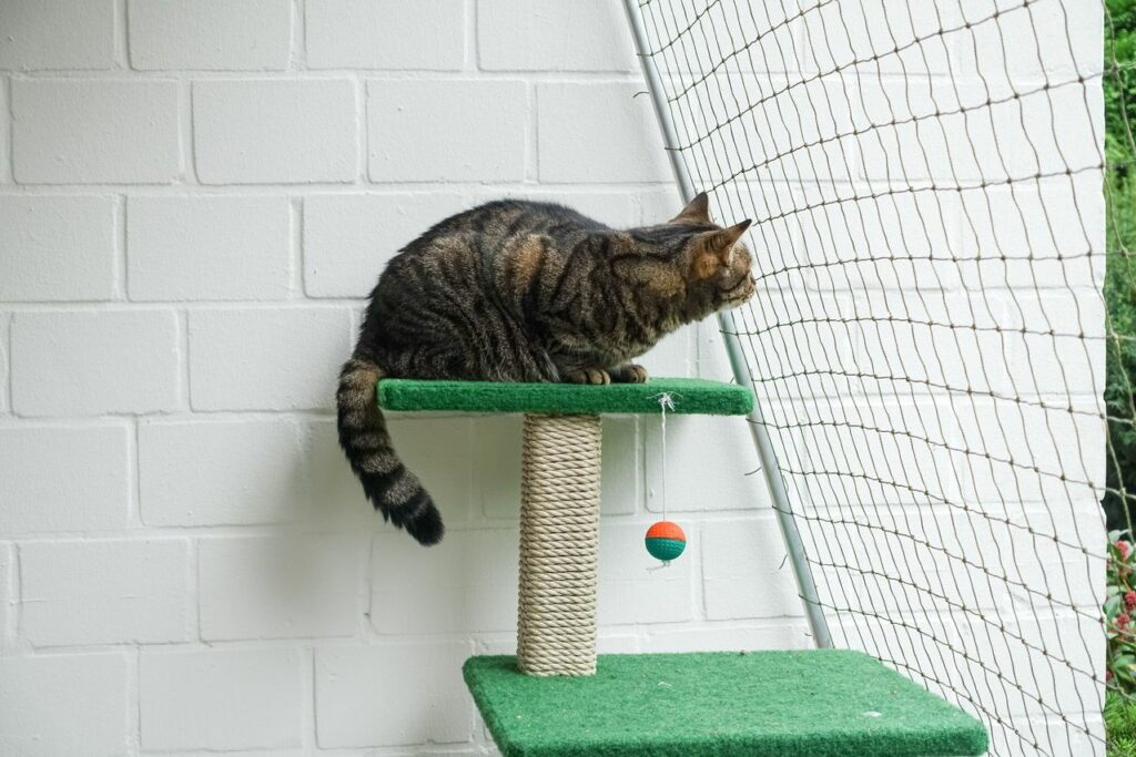 cat playing in a catio on a cat ree