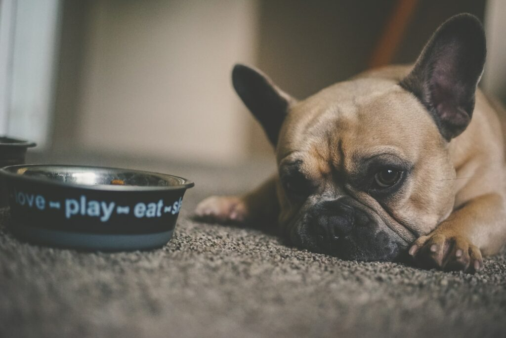 dog food bowl for your new puppy