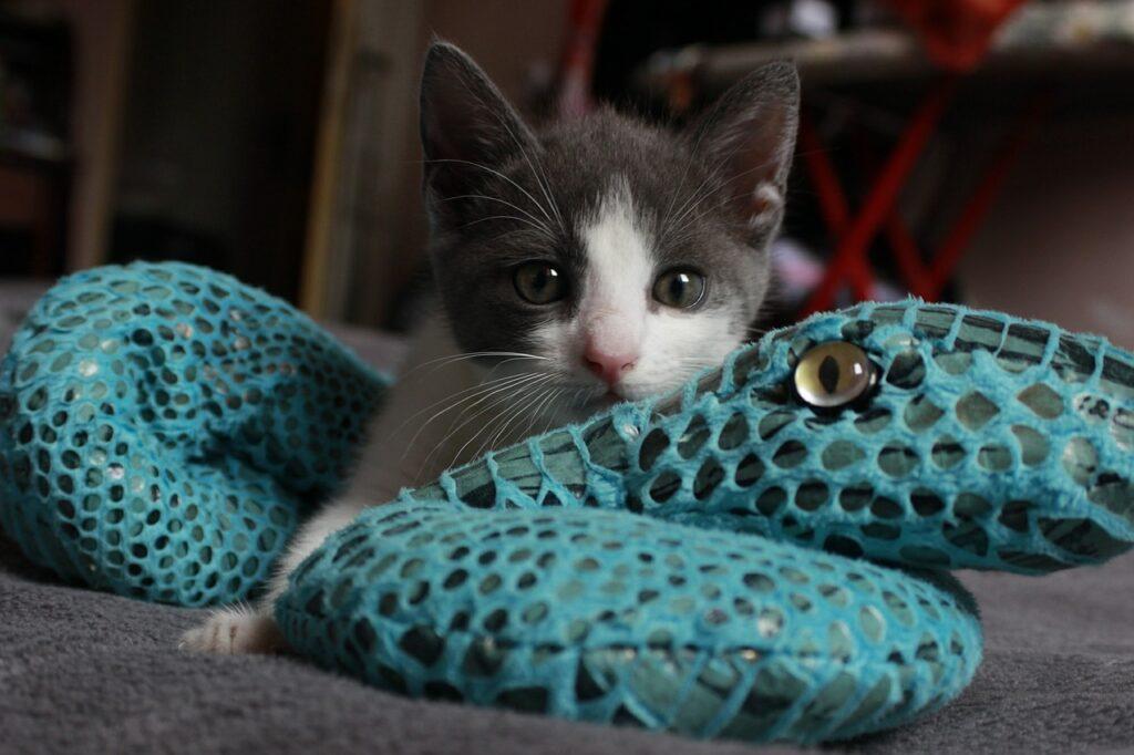 Toys For Kittens