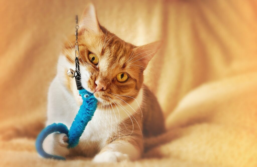 Toys For Adult Cats