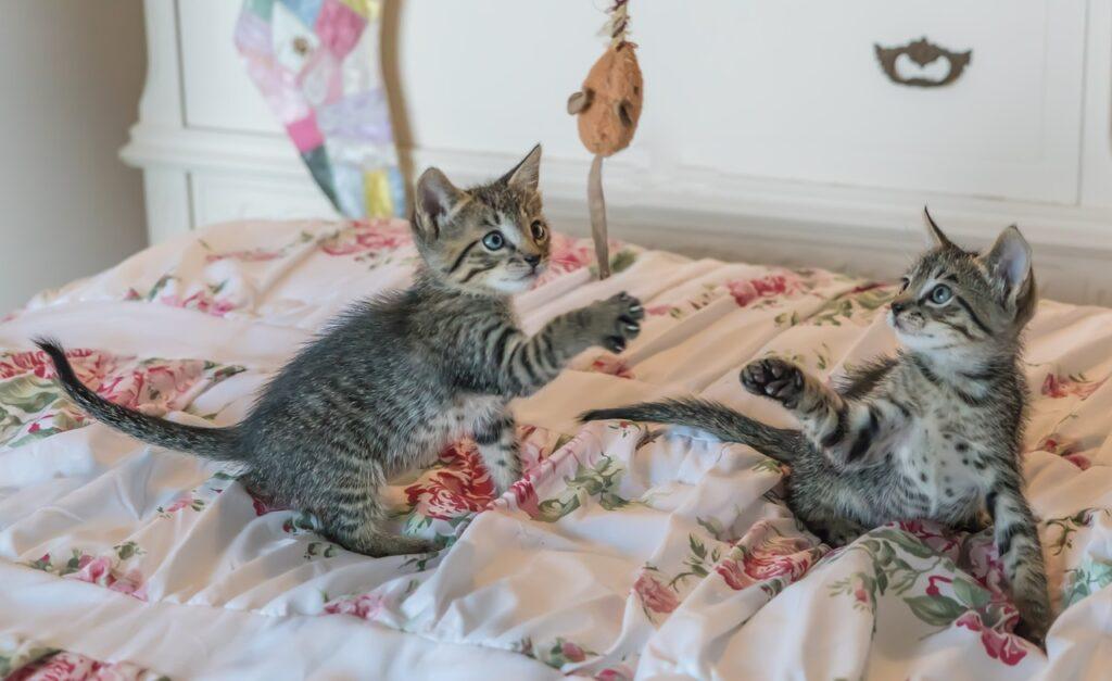 toys for kitten