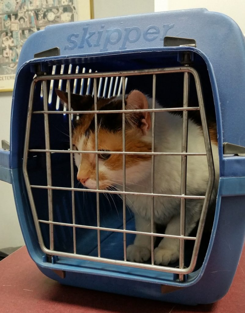 Traveling With Cats - cat in a carry box