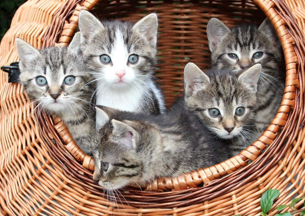 a basket full of kittens