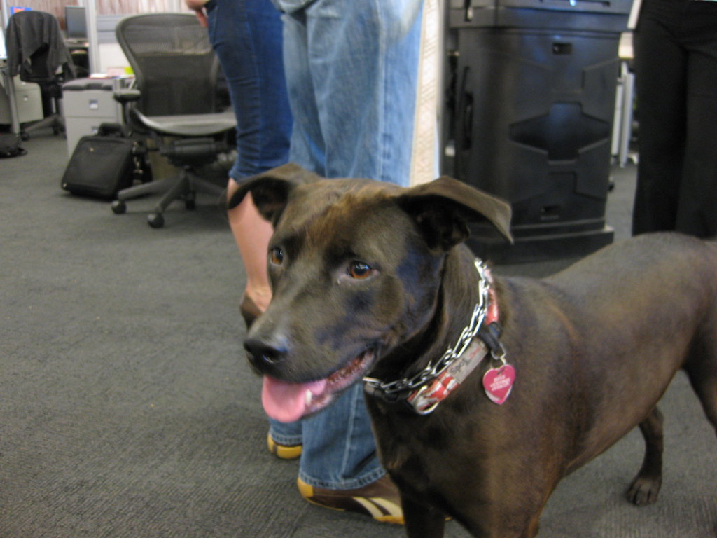 bringing dog to work