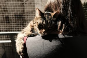 cancer in cats - cat resting on the shoulders of a woman
