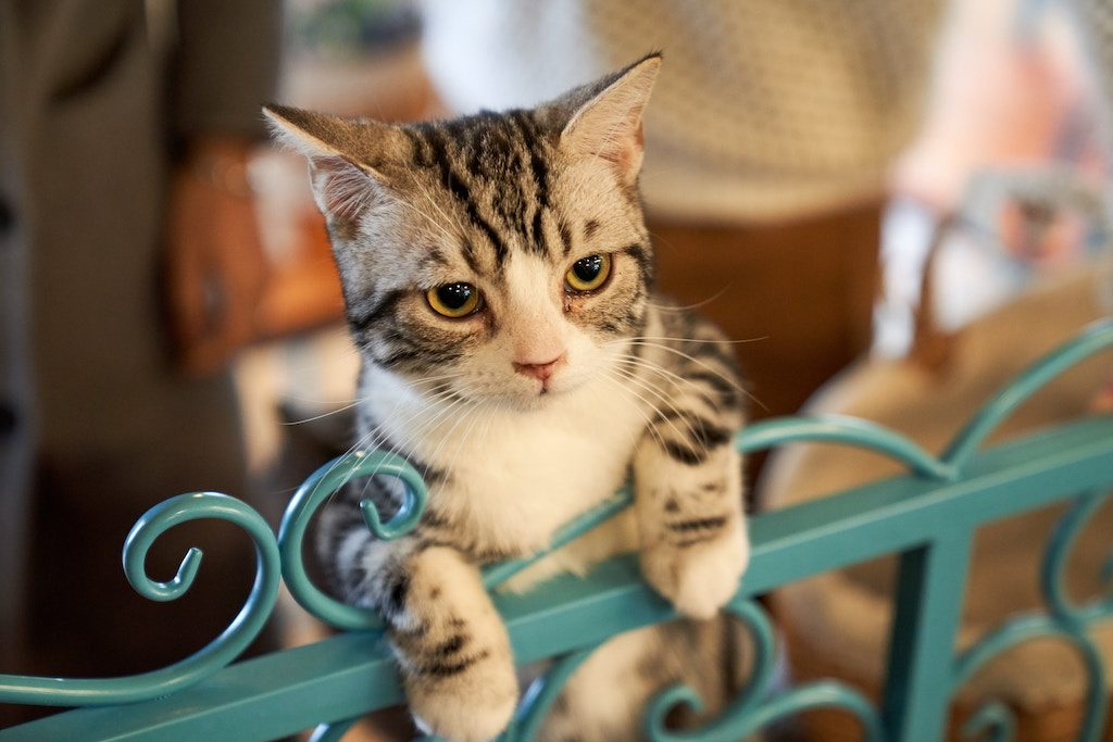 cat hanging on a metal gate