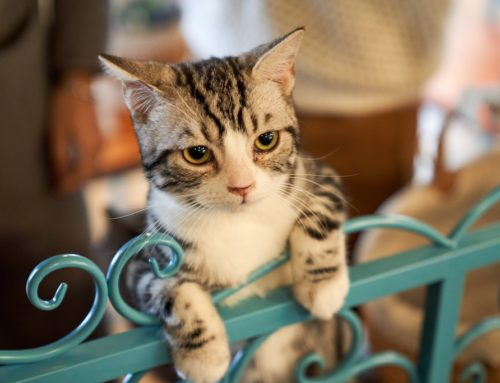 Cat Proofing Your Home: how to keep your cat and your home safe