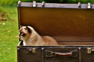 cat hotels and cat sitting - cat in a suitcase