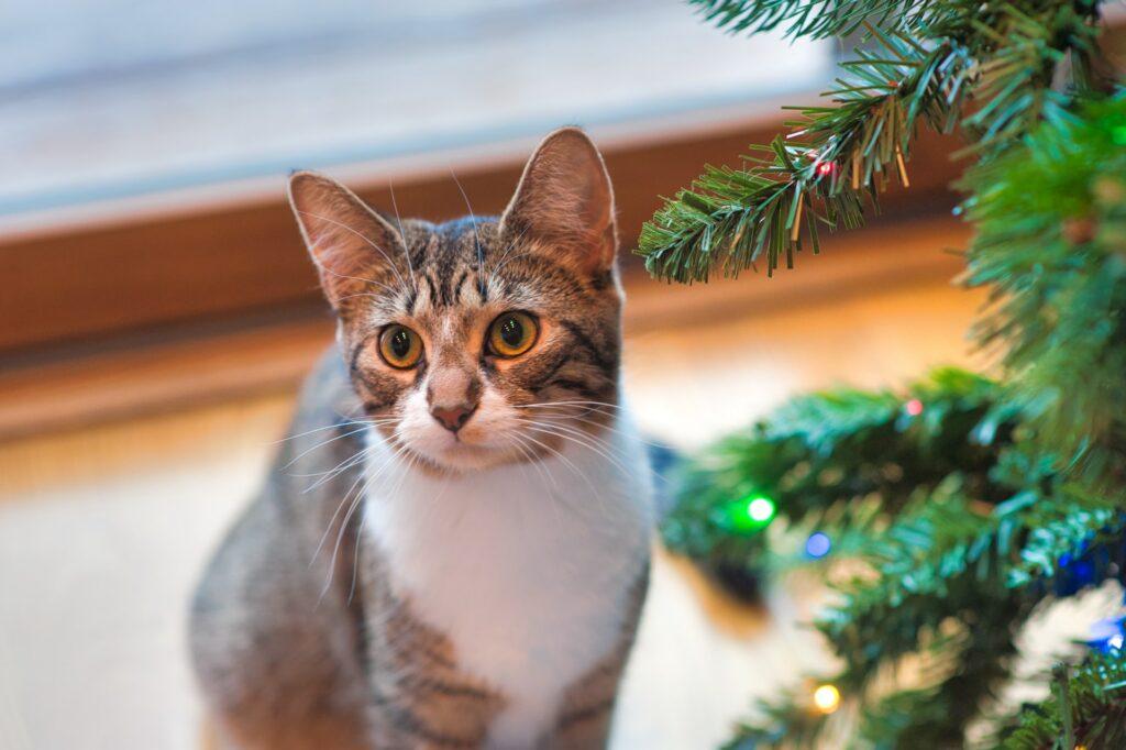 cat hotels and cat sitting - cat near a tree