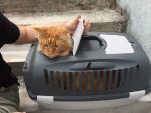 Cat in the pet carrier