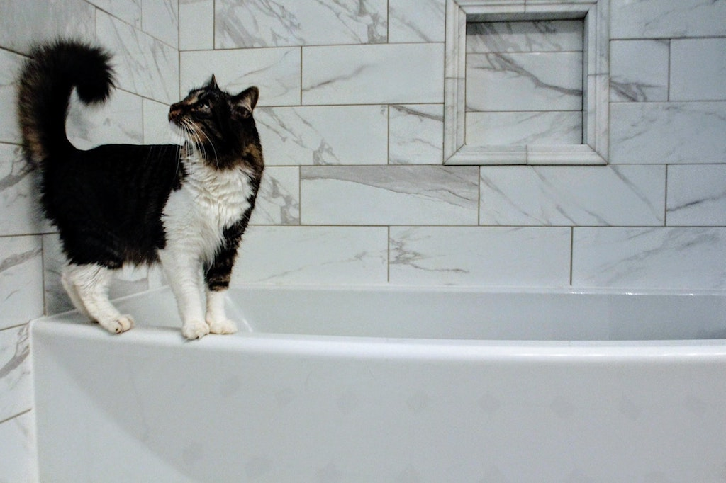 cat in the bathroom on the tub
