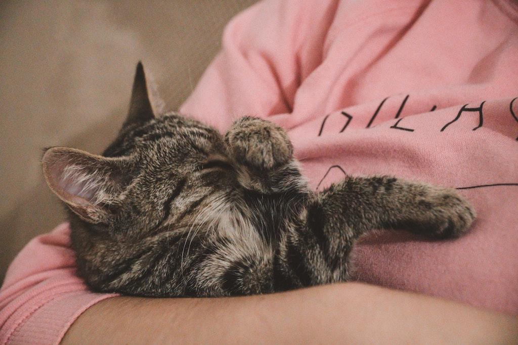 cat kidney disease - woman cradling a cat