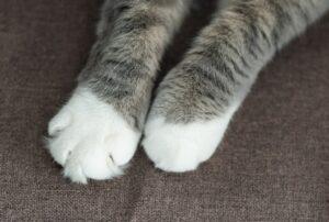cat kneading - cat paws