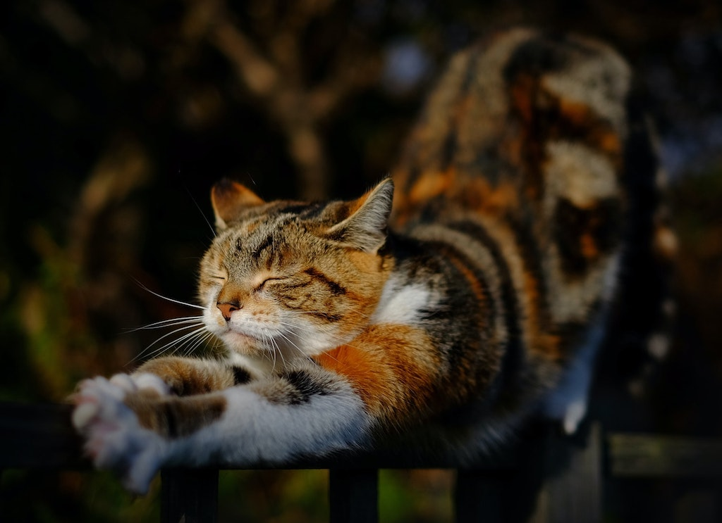 cat kneading - cat stretching and arching