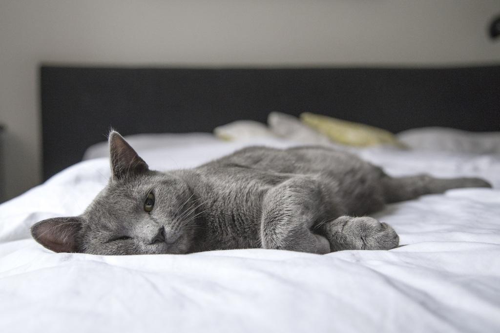 cat vomiting sick cat