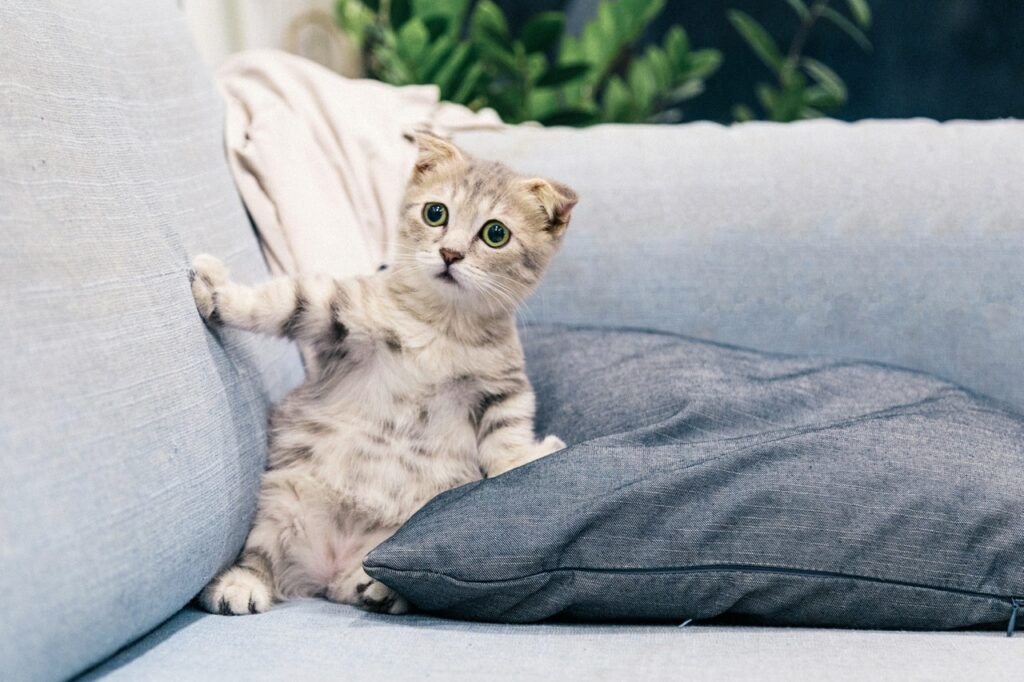cute funny kitten leaning on a sofa