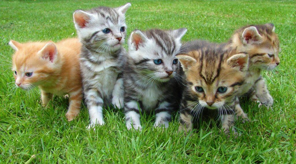 cute kittens on a green lawn