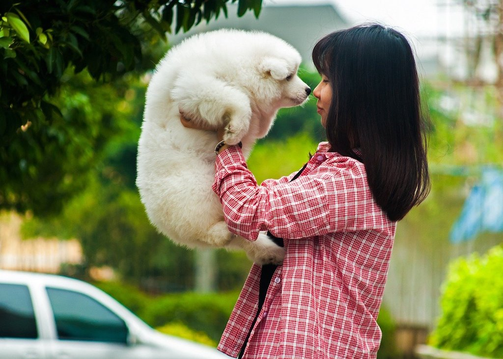 do dogs understand words - girl talking to a puppy