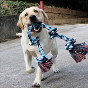 dog carrying a rope toy