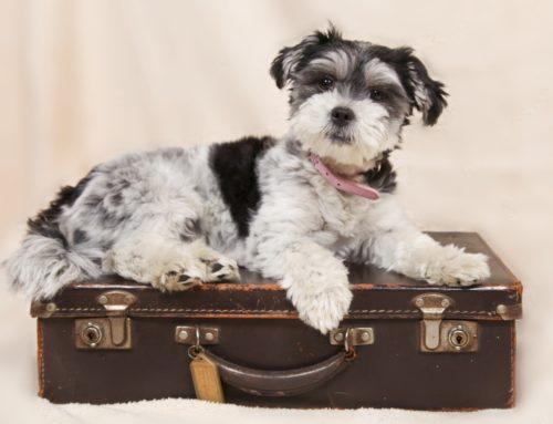 Moving Abroad With a Dog – How to Minimise Stress for Your Dog and Yourself