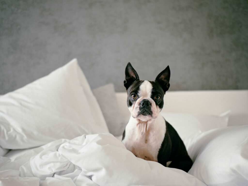 dog proofing your home