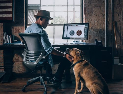 The Busy Dog Owner: Having a Dog and a Busy Lifestyle