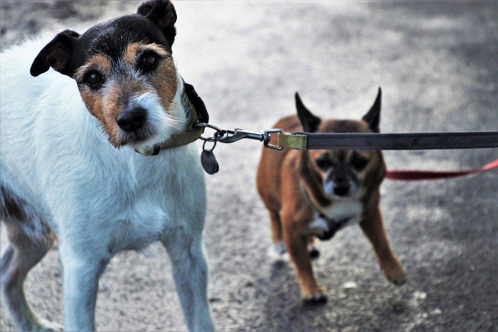 dog pulling on a leash